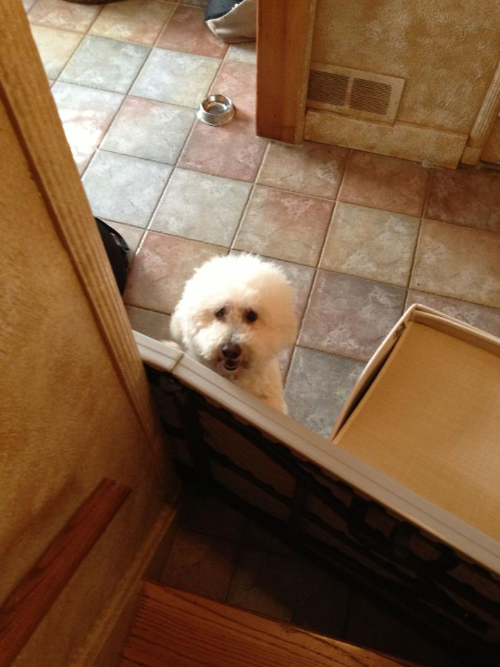 puppies for sale in delaware coton de tulear puppies for sale puppies for sale dogs 5681