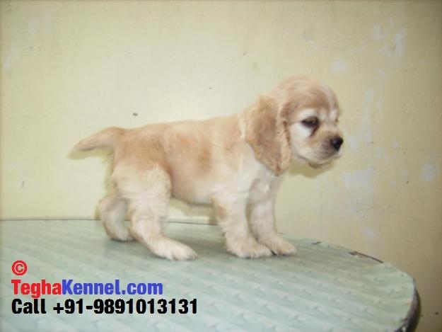 Good Dog Breeders In Delhi