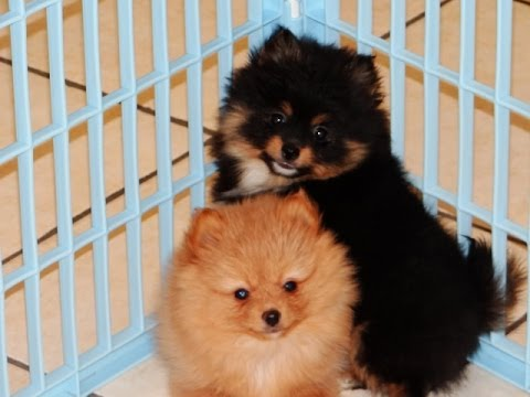 Dogs For Dog Breeders Kennel